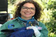 """Pantanal: """"Se a sociedade não entender sua importância, episódios como o do ano passado se repetirão"""""""