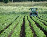 A economia dos recursos naturais diante da debilitação do Estado Nacional