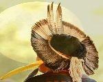 Lutar ou lutar, organizar e ter unidade - eis o caminho possível aos povos indígenas