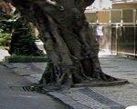 Cadê a árvore que estava aqui?