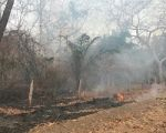 """Pantanal: """"Já queimaram uma área tão grande que os bichos não têm mais para onde correr"""""""