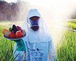 Entre o mercado e a farmácia: o agropop e a pandemia