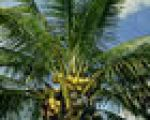 Quilombo dos Palmares: refúgio da liberdade
