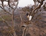 Pantanal teve pior seca em 50 anos, revela estudo